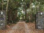 Driveway through rain forest at front entrance