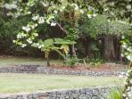 Back garden and rain foret setting