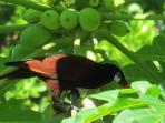The tropical birds of the Villa's gardens