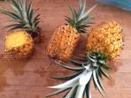 Pineapples form our hilltop farm!