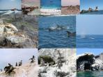 Isla Damas, punta Choros