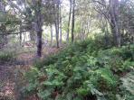 helechos en bosque interior