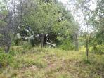 banca y mesa bajo coigüe en bosque interior