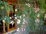 Jasmine perfumes the patio