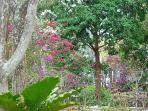 garden - December