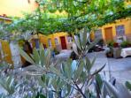 Olive tree in patio