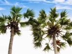 Palmyrah Palms surround resort