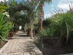 Among tropical vegetation