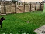 Garden, secluded and secure for dogs. Also patio area with garden seating