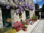 Wisteria time at Mas Pallares