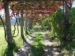 Caminho e ramada no Outono