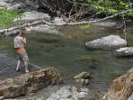 Fish for trout in Bull Run Brook