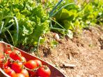 The villa has its own yard and garden where healthy biological (organic) vegetables are grown.