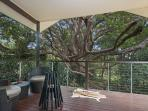 Cape Cottage Back Deck Overlooking 500 Year Old Fig Tree