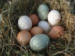 Some of the various eggs laid by our hens and ducks, and regularly enjoyed by our guests.