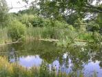 Wildlife ponds