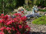 azalées en fleurs jardin zen