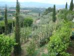 Our garden with fresh fruit and vegetables. Orto con frutta e verdura fresca. ????????????.