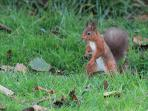 The red squirrel - our cutest visitor!