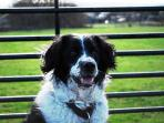 Great local walks for dogs