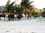 Horseback riding on the beach anyone?