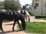 Horses grazing in the village is a common view