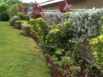 Side garden plants