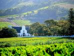 Wines farms aplenty in and around Cape Town - great wine great food