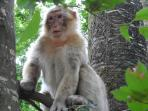 Get close to the monkeys at the nearby Vallée Des Singes