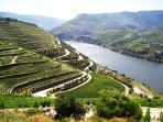 Une photo de la vallée du Douro