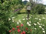 Spring, summer flowers