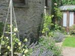Enjoy the enclosed garden, great for dogs!