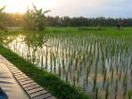 Watch the new rice grow right from the deck at Harmony