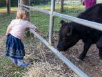 Farm feeding activities for little and big kids