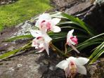 Orchids and other exotics grow wild in the garden at French Cottage and Loft
