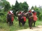Elephant safari and jungle trek. Great fun for all the family
