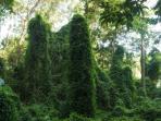 Beautiful vegetation in Osa Peninsula
