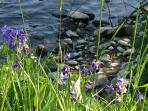 Enjoy the bonnie bluebells in spring - right there on the river bank