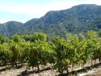 Wine and Alpilles