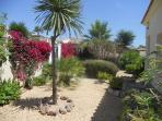 Well maintained garden, planted with mature shrubs, succulents, fruit trees and plants