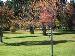 city Park , you can walk to it from sutherland place