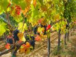 Why not try wine tasting in the many vineyards of the Stada del Vino