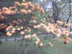 Spring blossoms Go Vols!!