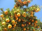 Nepali Fruits