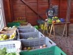 José vend ses légumes au marché du bourg des Anses d'Arlet