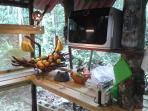 Cocina de la selva