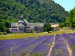 Abbaye de Senanque near us and the city Gordes