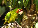 Eco Quechua birds tour