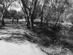 Walk around the tranquil Lake Benalla