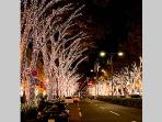 Famous Omotesando Rd, 5-6 minutes walk from the apartment!